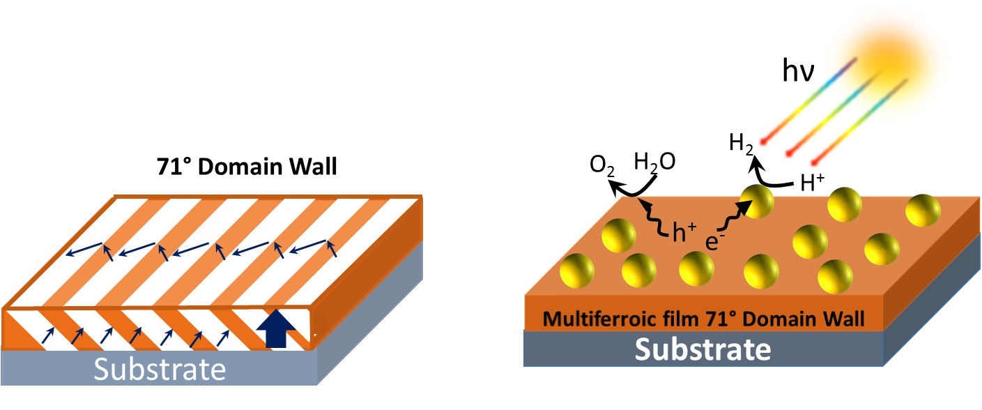 Effect of Ferroelectric Polarization on Solar-based Photocatalytic Activities in Multiferroic-Metal Conjugation