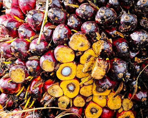 Monash Malaysia -  Palm Oil Education and Research