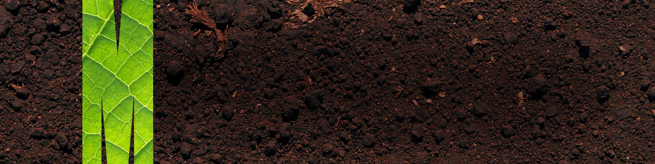 July 2019: AEP's Soil Workshop and Short Course